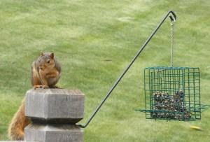 squirrel_05_26_07